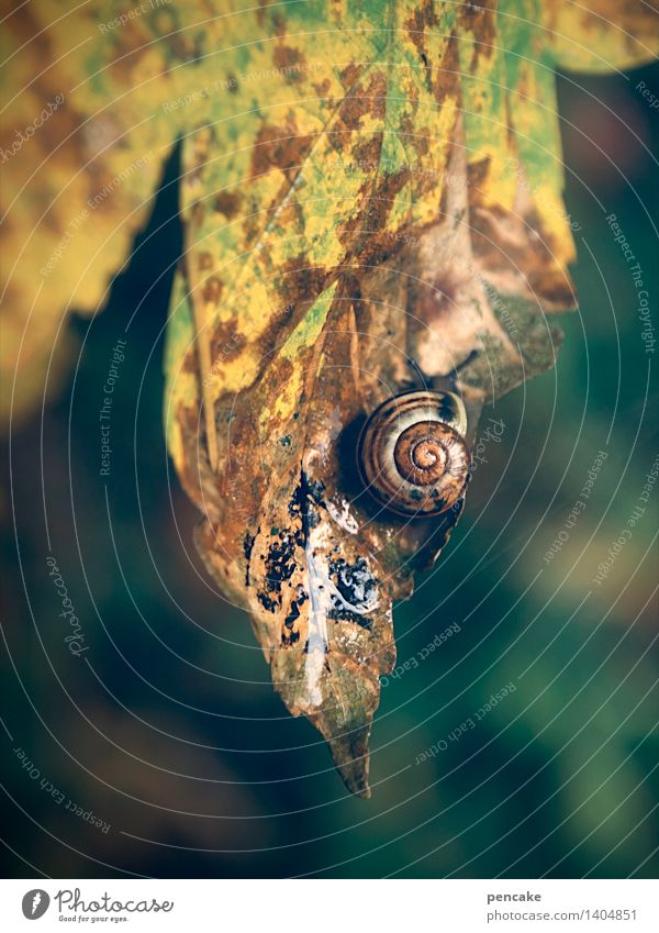 The last sheet Autumn Leaf Forest Animal Snail Sign Transience Snail shell Multicoloured Damp Autumn leaves Colour photo Exterior shot Close-up