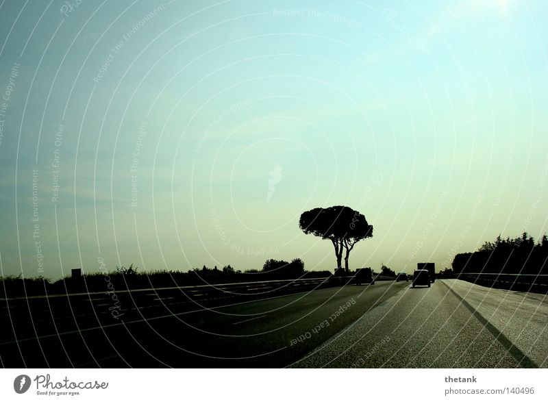 Tree Calm Street Car Speed Motor vehicle Highway Haste Freeway
