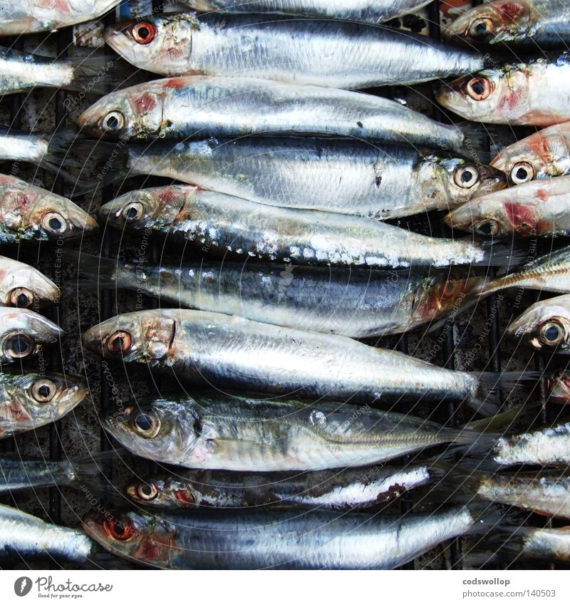 sardines au barbecue Barbecue (apparatus) Sardine Nutrition Kitchen Leisure and hobbies fish BBQ cooking heads tails