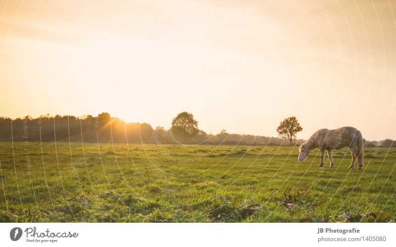 Appearance or reality? Landscape Meadow Horse Contentment Joie de vivre (Vitality) Warm-heartedness Together Iceland Pony Icelander Sunset Sunbeam Moody Calm