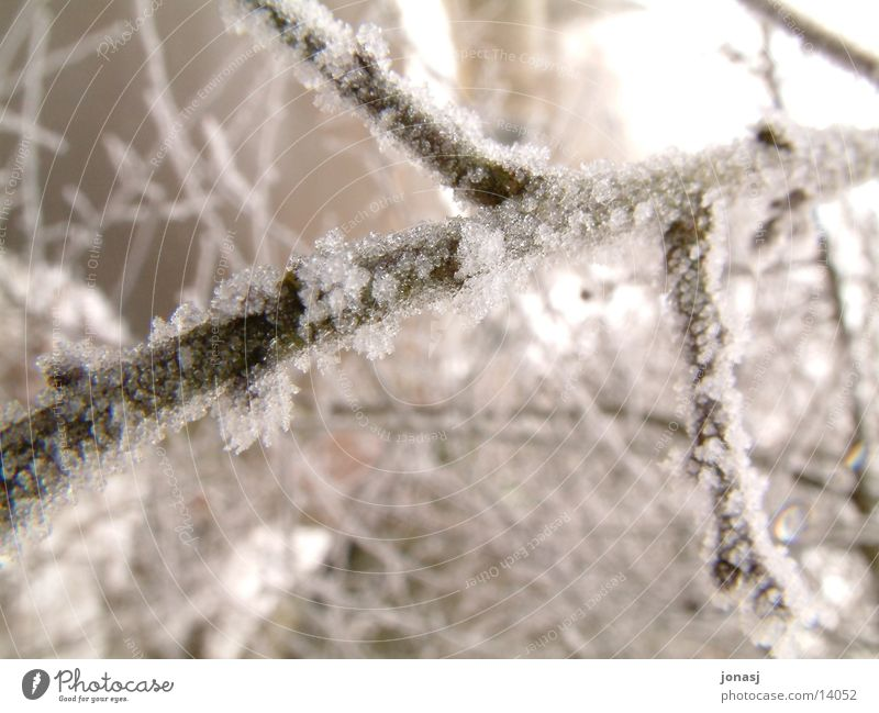Ice Branch Twig