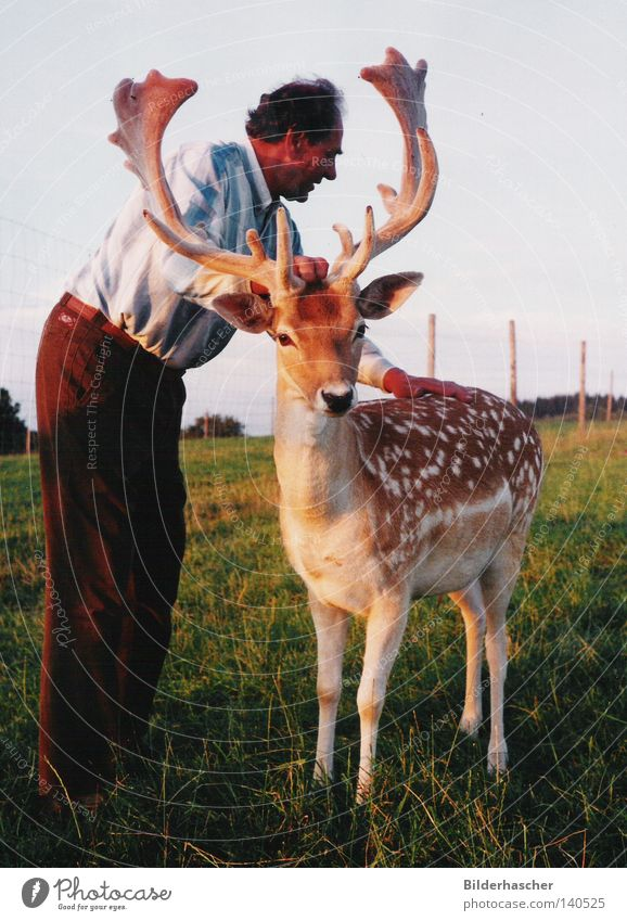 cuddles Fallow deer Meadow Wild animal Human being Animal Game park Breeder Leisure and hobbies Deer Antlers Mammal Shovel
