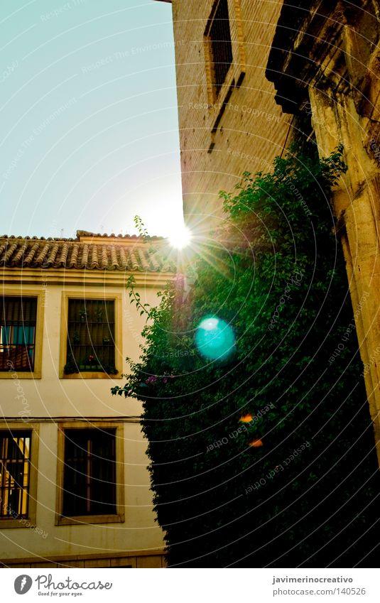 Celestial Plant Street Facial expression Blue Cordoba Town Traffic infrastructure Andalusian vou paseo mirar verde luz rincón rayo hiedra ventana fachada