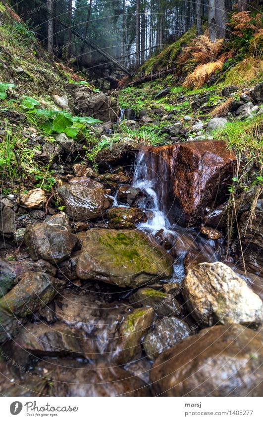 refreshingly Autumn Forest Brook Waterfall Mountain stream Success Refreshment Love of nature Nature Colour photo Subdued colour Exterior shot Deserted