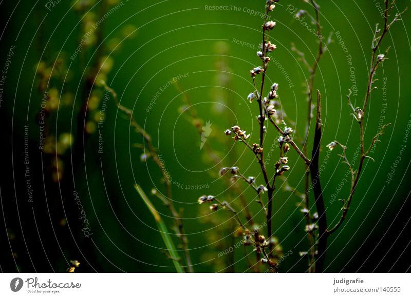 Nature Green Plant Summer Colour Dark Meadow Grass Warmth Environment Growth Physics Delicate Fine Flourish