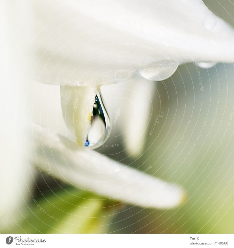 Nature Water White Green Plant Rain Bright Rope Wet Drops of water Near Square Damp Dew Transparent Format