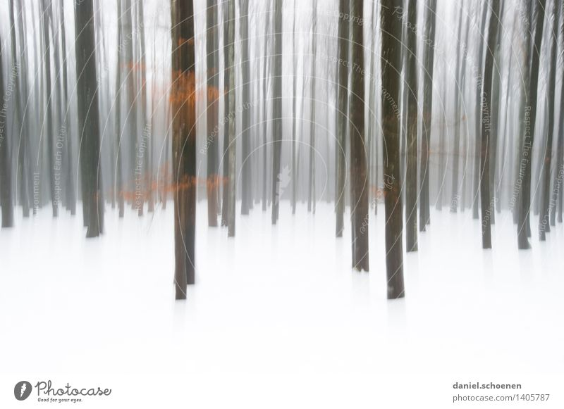 winter forest Winter Snow Ice Frost Tree Forest Cold Black White Loneliness Subdued colour Exterior shot Abstract Deserted Copy Space bottom Motion blur