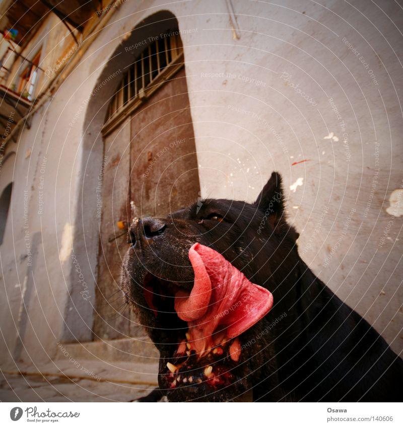 sweet tooth Dog Snout Set of teeth Pine Jaw Jawbone Tongue Black Animal Pet Pelt Door Entrance Doorman Bite Dangerous access control Wauwau