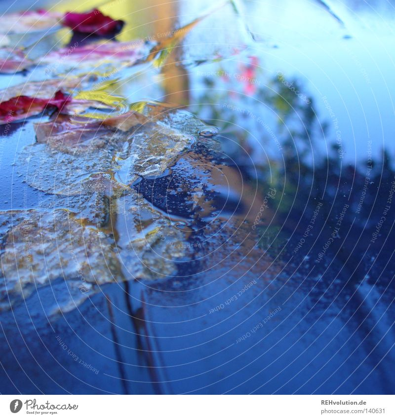 Water Beautiful Sky Blue Leaf Blossom Rain Moody Weather Drops of water Wet Table Rose Damp