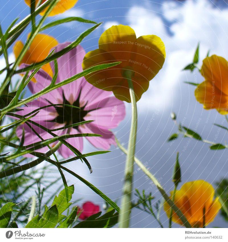 Sky Flower Plant Summer Clouds Cold Meadow Blossom Grass Spring Rain Fear Tall Fresh Growth Threat