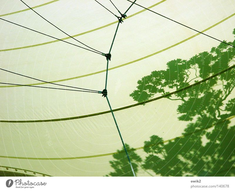 Tree Leaf Art Contentment Background picture Rope Safety Roof Culture Shows Branch Plastic Club Concert Connection Stage