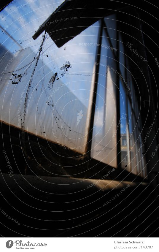Sky Blue Animal Window Fear Dirty Disgust Spider Dust Spider's web Tailor Carpenter Shoemaker