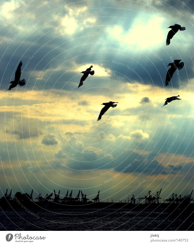 Water Sky Sun Clouds Bird Waves Weather Flying Hamburg Industry Aviation Wing Harbour Navigation Seagull Crane