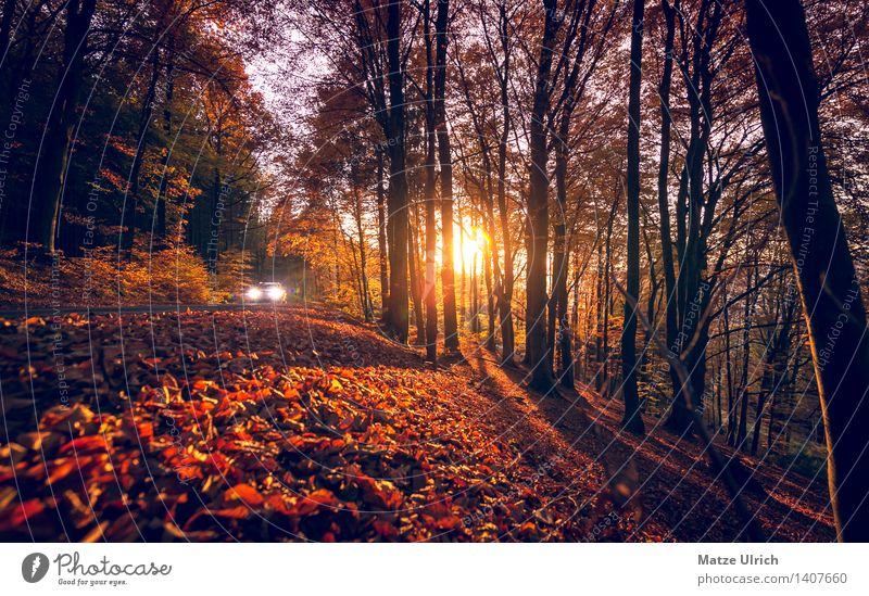 Autumn sun in the forest Environment Nature Sun Sunrise Sunset Sunlight Beautiful weather Tree Leaf Autumn leaves Forest Motoring Vehicle Car Warmth Street