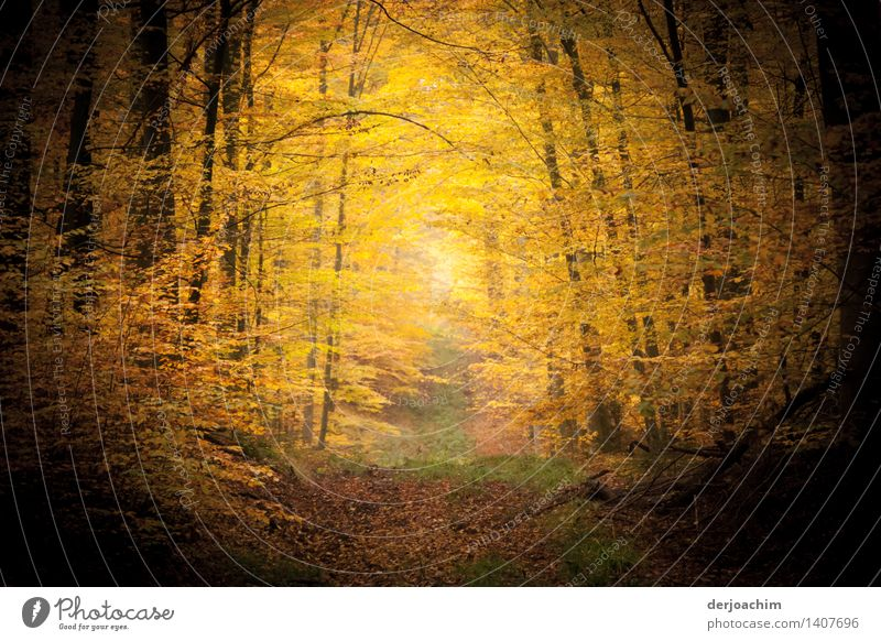 autumn mood Joy Well-being Hiking Agriculture Forestry Nature Sunlight Autumn Beautiful weather Tree Bavaria Germany Deserted Wood Observe Discover To enjoy