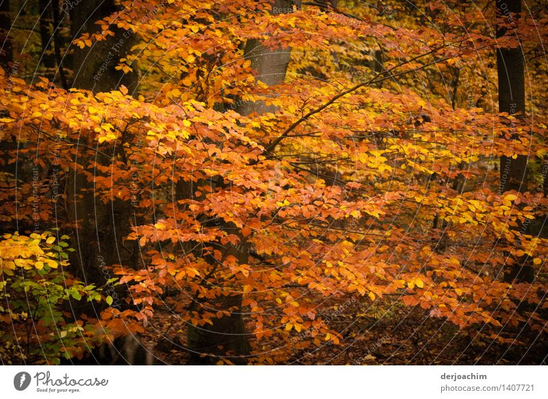 autumn magic Exotic Well-being Hiking Nature Autumn Beautiful weather Leaf Forest Bavaria Germany Deserted Wood Observe Discover To enjoy Smiling Illuminate