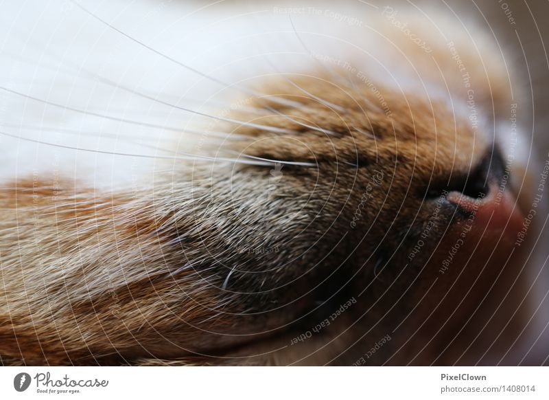 Sleeping cat Animal Pet Cat Animal face Pelt Claw 1 Cute Brown Love of animals Colour photo Close-up