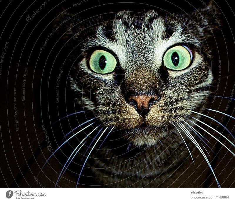 Animal Cat Pelt Discover Stupid Captured Mammal Surprise Domestic cat