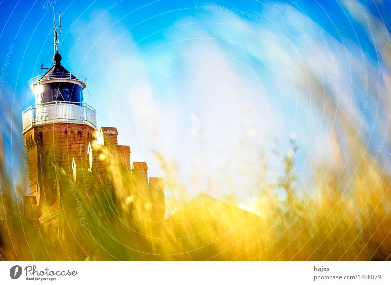Beach grass with old lighthouse Vacation & Travel Trip Plant Grass Harbour Lighthouse Tourist Attraction Brick Old Blue Brown Yellow Romance Idyll marram grass