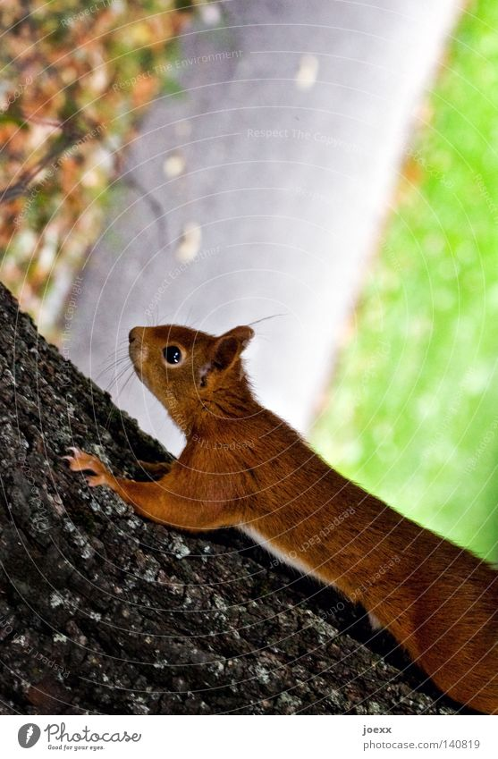 Nature Tree Red Animal Relaxation Eyes Funny Brown Free Speed Action Europe Sweet Cute Ear Curiosity