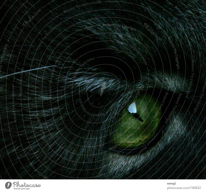 Cat Animal Black Eyes Pelt Near Evil Pet Mammal Black-haired Domestic cat Eerie Cat eyes Gaze Slitted eyes
