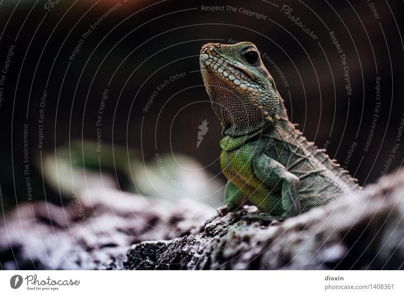Nature Animal Environment Natural Wild animal Exotic Reptiles Saurians