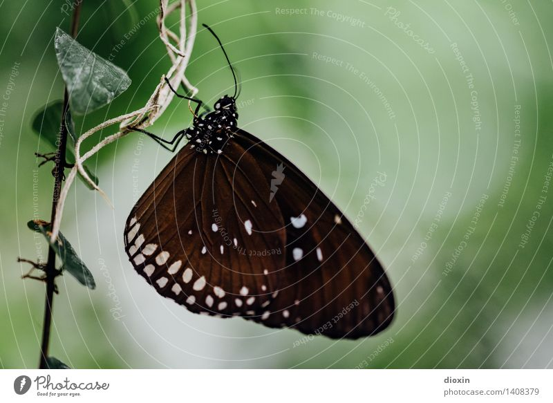 cliffhanger Plant Ivy Animal Wild animal Butterfly Wing Compound eye Feeler 1 To hold on Hang Small Ease Delicate Colour photo Close-up Detail