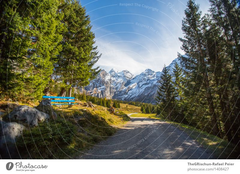 Swiss Beauty Environment Nature Landscape Blue Brown Gray Green Black White Lanes & trails Bench Mountain Tree Forest Snow Clouds Stone Hiking Switzerland