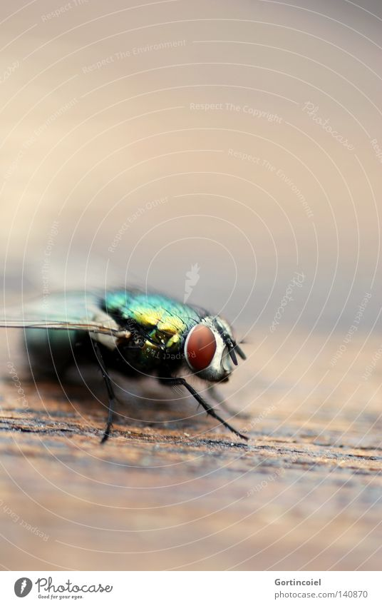 Nature Summer Animal Colour Wood Legs Fly Flying Wing Insect Rainbow Feeler Glimmer Trunk Elephant Carnivore