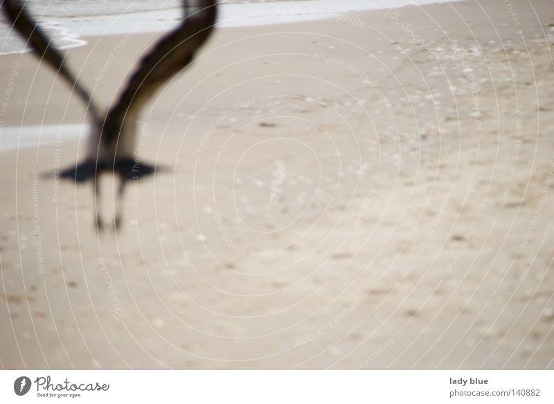 cursed Raven birds Flying Beach Ocean Baltic Sea Usedom Black Feather Sand Blur Escape Bird Island Summer Coast Aviation island worlds