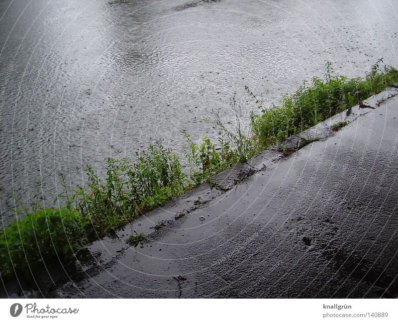 Sunday morning Ruhr Water River Rain Wet Damp Lanes & trails Asphalt Gray Bad weather River bank Foliage plant Plant Wayside Air bubble Glittering Diagonal