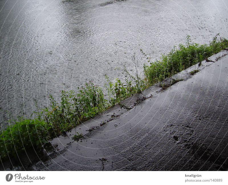 Sunday morning Ruhr Water River Rain Wet Damp Lanes & trails Asphalt Gray Bad weather River bank Foliage plant Plant Wayside Air bubble Glittering Diagonal