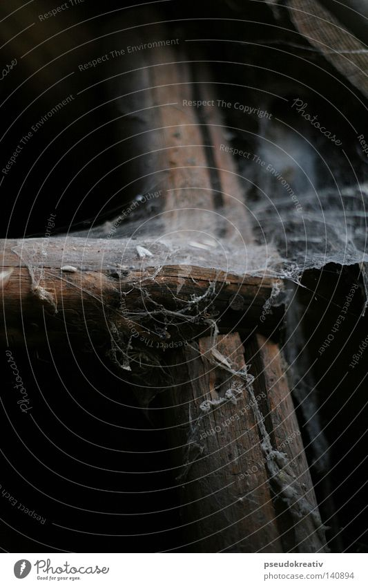Tobi - Spiderman is gone! Spider's web Old Dusty Ladder Attic Insect Dirty Loneliness Hang Dark Bum around Putrefy Fear Panic Household Net spooky