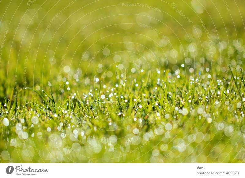 Half past nine in the morning... Nature Plant Drops of water Grass Blade of grass Dew Garden Meadow Glittering Fresh Green Colour photo Multicoloured