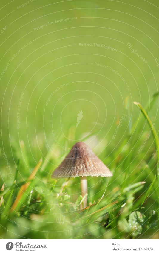so small with hat² Nature Plant Autumn Grass Mushroom Meadow Growth Small Brown Green Colour photo Multicoloured Exterior shot Close-up Macro (Extreme close-up)