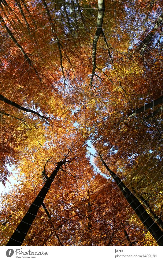 Colourful sky Environment Nature Plant Sky Autumn Beautiful weather Tree Leaf Forest Large Bright Natural Contentment Serene Calm Leaf canopy Beech wood