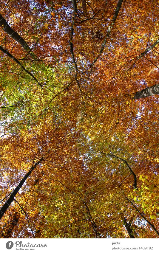 all colours Nature Landscape Plant Sky Autumn Beautiful weather Tree Leaf Forest Fresh Glittering Bright Natural Calm Roof Weatherproof Multicoloured spessart