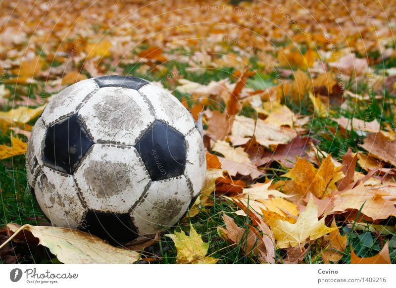 Old Joy Autumn Meadow Grass Sports Playing Park Leisure and hobbies Action Soccer Round Foot ball Ball Autumn leaves Autumnal