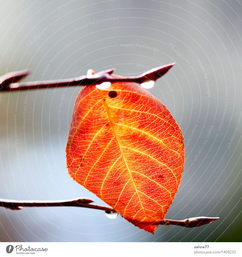 sandwiched Nature Plant Autumn Bad weather Tree Leaf Drop Autumnal colours Rachis Twigs and branches Yellow Gray Orange Loneliness Hope Ease Calm Change