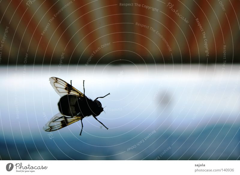 White Window Head Legs Orange Fly Wing Insect Stripe Window pane Striped Sun blind Translucent Hover fly Sun gate Sunshield