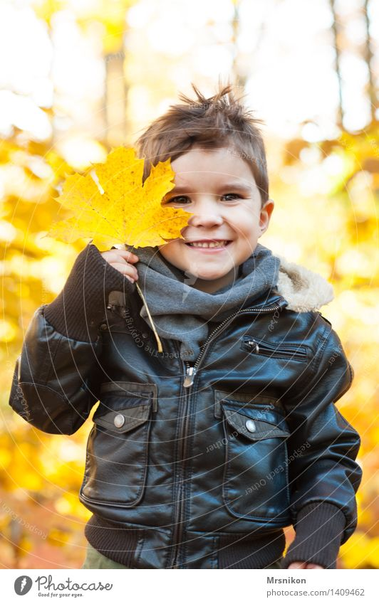 One leaf Toddler Boy (child) Infancy 1 Human being 3 - 8 years Child Beautiful Autumn Autumnal Autumnal colours Autumn leaves Early fall Automn wood Happiness