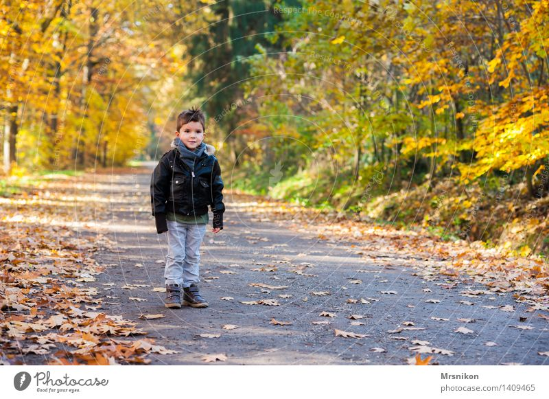 A boy standing in the woods Child Toddler Boy (child) Infancy Life 1 Human being 3 - 8 years Nature Autumn Leaf Forest Stand Footpath Lanes & trails Loneliness