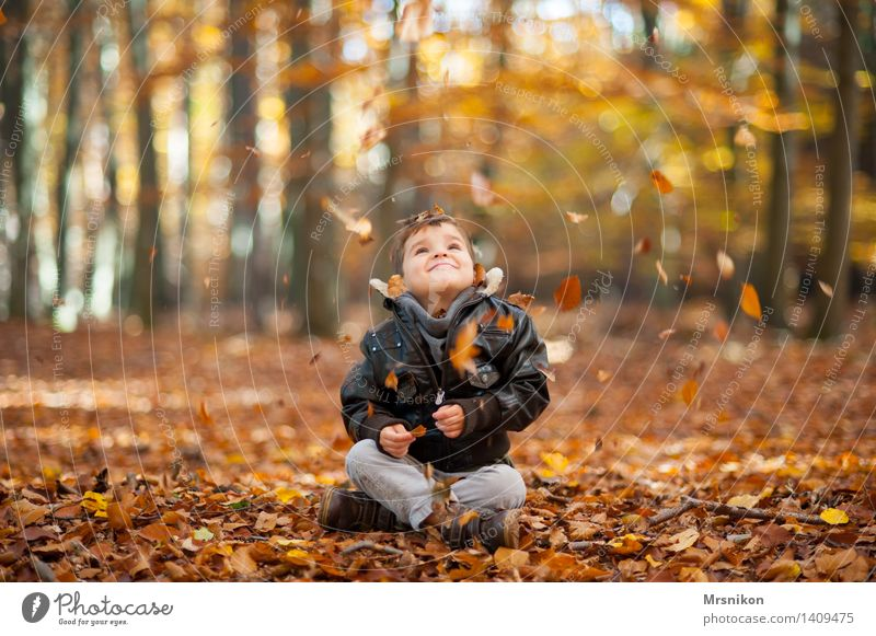 Human being Child Leaf Autumn Boy (child) Masculine Infancy Sit Happiness Joie de vivre (Vitality) To fall Toddler Autumn leaves Autumnal Autumnal colours