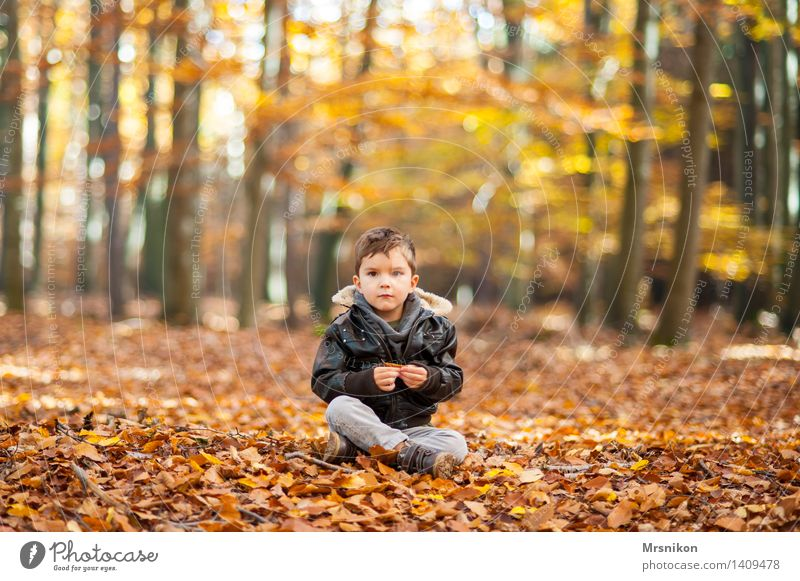 in the wood Child Toddler Boy (child) Infancy Life 1 Human being 3 - 8 years Nature Autumn Beautiful weather Forest Sit Sit Cross Legged Looking Staring Wait