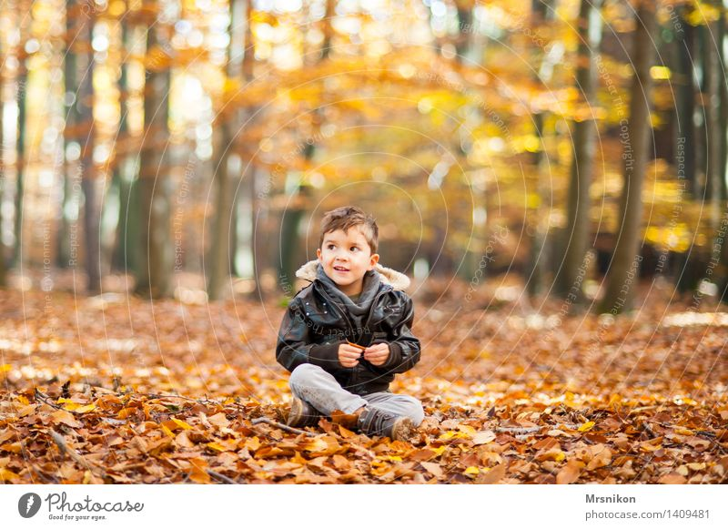 In the autumn forest Child Toddler Boy (child) Infancy Life 1 Human being 3 - 8 years Nature Autumn Forest Smiling Sit Autumnal Autumn leaves Automn wood