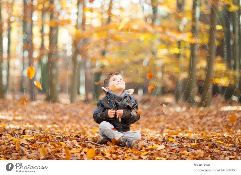 autumn Child Toddler Boy (child) Infancy Life 1 Human being 3 - 8 years Smiling Laughter Looking Sit Autumn Autumnal Autumn leaves Automn wood Forest Woodground