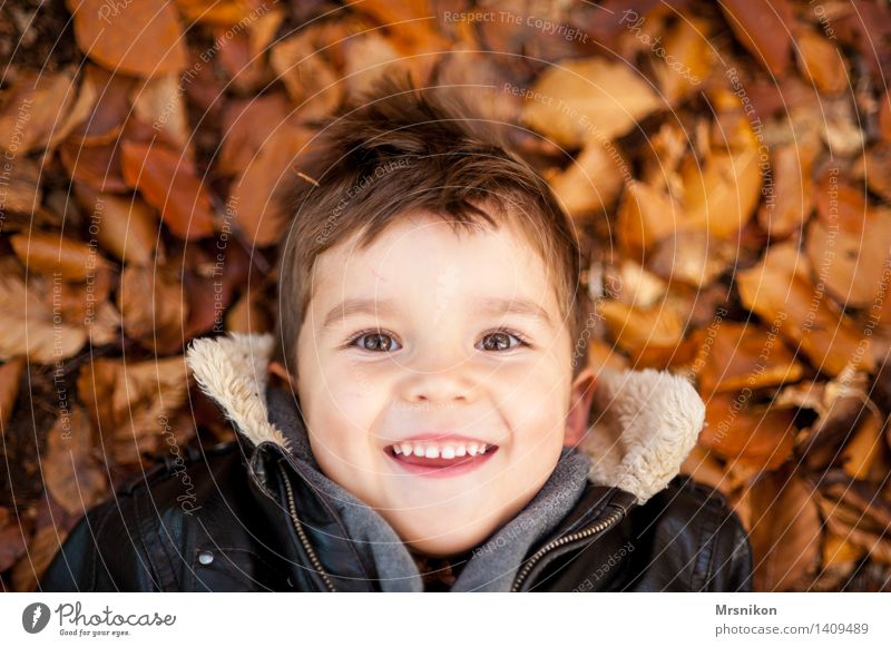 Happy Child Boy (child) Infancy 1 Human being 3 - 8 years Illuminate Autumn Autumnal Autumn leaves Lie Laughter Happiness Looking Comical Funster Colour photo