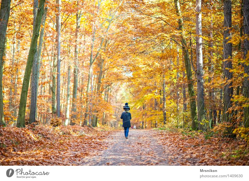 Human being Child Landscape Forest Adults Life Autumn Family & Relations Happy Together Hiking Infancy Walking Footpath To go for a walk Toddler