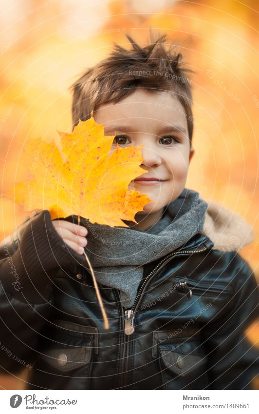 Human being Child Nature Leaf Forest Autumn Boy (child) Garden Park Weather Orange Infancy Smiling Beautiful weather Brunette Toddler