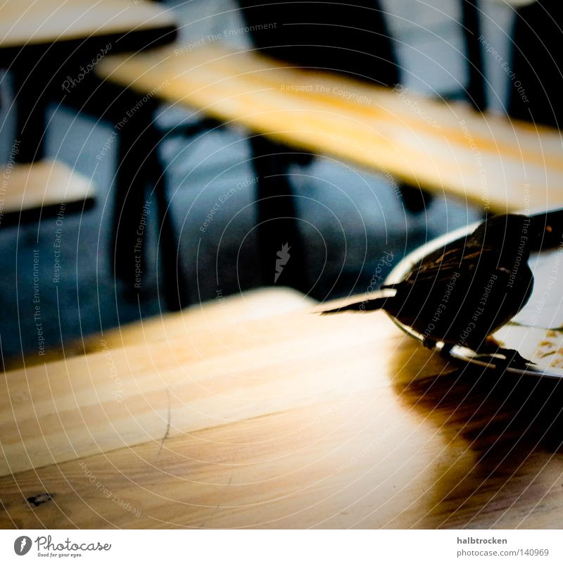 City Animal Nutrition Food Leisure and hobbies Bird Flying Photos of everyday life